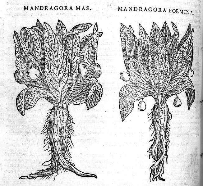 653px-Woodcut;_two_mandrake_plants._Wellcome_L0011700.jpg