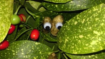 googly eyes-wreath-christmas