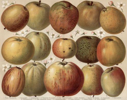 Apfelsorten_Diel-Lucas