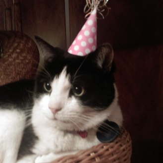 cat_in_a_hat1
