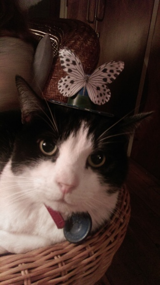 cat_in_a_hat2