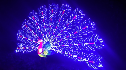 magic_lantern_festival6