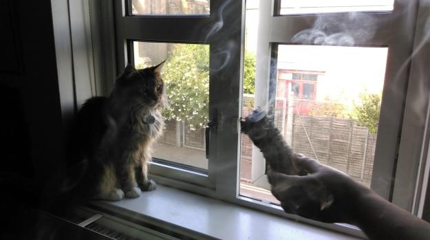 cat_smudge