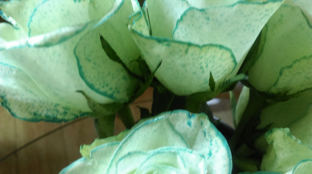 blue_speckled_roses