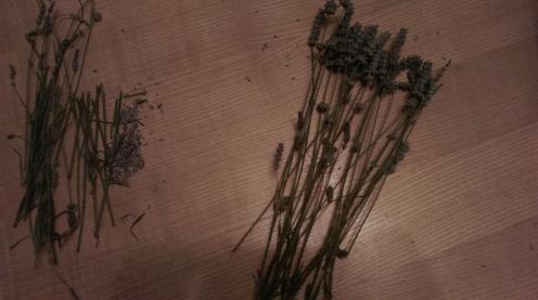 lavender_spindle11