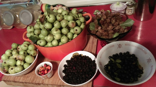 spoils_of_foraging