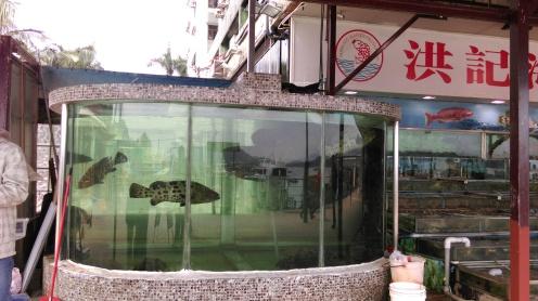 restaurant_fish_tank