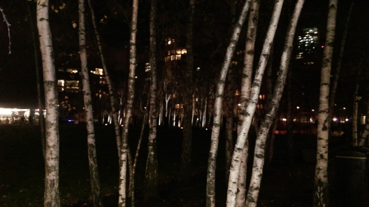 birch_grove_at_night