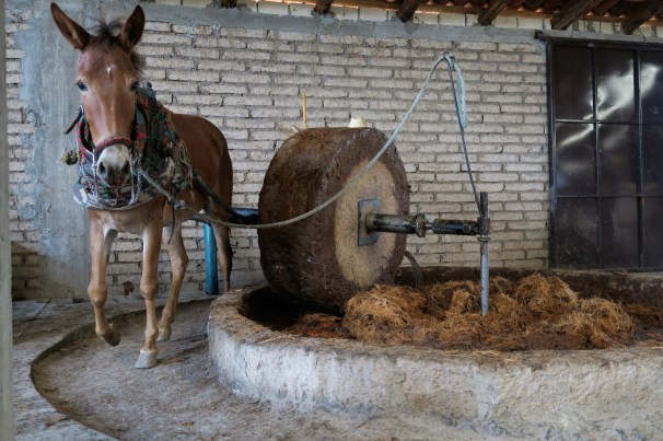 mezcal_production_horse