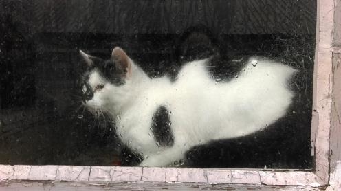 barn_cat1