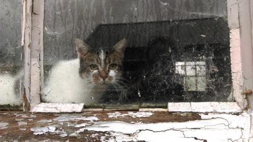 barn_cat2