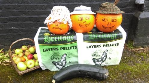 harvest_festival_pumpkins