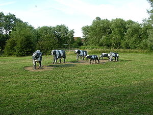 concrete_cows
